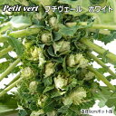 非結球芽キャベツ苗・プチベール ホワイト(10,5cmポット)