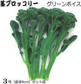 茎ブロッコリー グリーンボイス 9cmポット苗 【ラッキーシール対応】