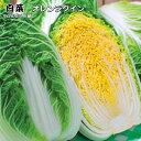 白菜苗・オレンジクイン 5ポットセット