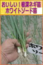 ねぎ苗・ホワイトソード(抜き苗50本束)