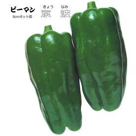 実生 ピーマン 京波 9cmポット苗 【ラッキーシール対応】