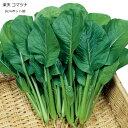 コマツナ苗(小松菜)・楽天小松菜 5ポットセット