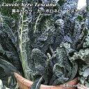 黒キャベツ苗・カーボロネロトスカーナ 5ポットセット