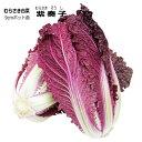 紫白菜苗・紫奏子(ムラサキそうし・旧紫色舞)5ポットセット