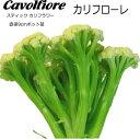 カリフラワー カリフローレCavolfiore 9cmポット苗 スティックカリフラワー 【ラッキーシール対応】