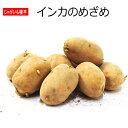 じゃがいも 種芋 インカのめざめ 500g ジャガイモ 【店頭受取対応商品】
