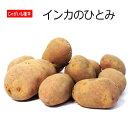 じゃがいも インカのひとみ 種芋 500g ジャガイモ
