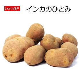 じゃがいも インカのひとみ 種芋 500g ジャガイモ 【ラッキーシール対応】