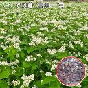 そば種・信濃一号(秋そば)種子1kg