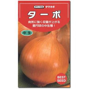 タマネギ 種子 ターボ 20ml 玉ねぎ