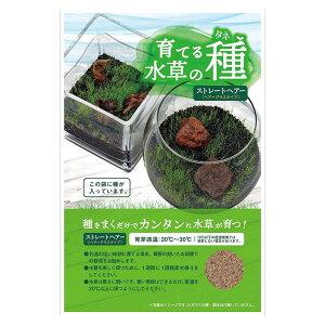 マルカンニッソー 育てる水草の種 リュウボク