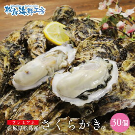 送料無料 プレミアム 松島産 産直  さくらかき 30個 ※只今の季節は生食可能です 活出荷 牡蠣 カキ かき 貝 父の日