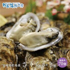 送料無料 松島産 産直 さくらかき 70個 ※只今の季節は生食可能です 活出荷 牡蠣 カキ かき 貝 父の日