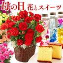 【まだ間に合う】 母の日 [ カーネーション 鉢植え 花 プレゼント スイーツ スイーツギフト 母の日ギフト ギフト プリザーブドフラワー…