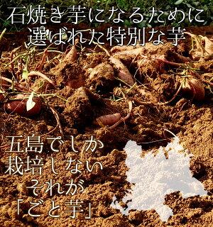 石焼きごといも/やきいも/石焼き芋/焼きいも/いしやきいも【冷凍】島の自然の恵みで育ちました♪ねっと〜り極甘♪石焼ごと芋(250g入)6袋(総量1.5kg)セット