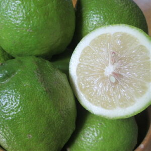 【20%OFFクーポンあり】無農薬レモン 5kg 愛媛 中島産 ノーワックス 防腐剤不使用 サイズ不揃い 訳あり 無化学肥料 国産