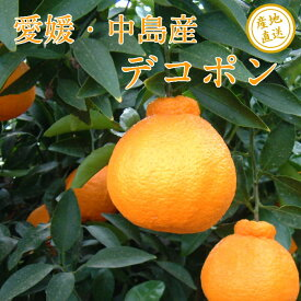 【送料無料】愛媛・中島産 デコポン 訳あり 2kg ノーワックス・防腐剤不使用 サイズ不揃い