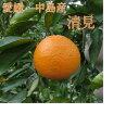 愛媛・中島産 清見 家庭用 5kg ノーワックス・防腐剤不使用 サイズ不揃い