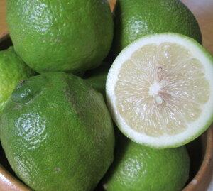 【20%OFFクーポンあり】愛媛 中島産 レモン 家庭用 2kg ノーワックス 防腐剤不使用 サイズ不揃い 国産