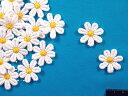 綿モチーフ白×黄