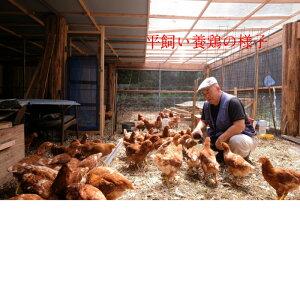 南総フォレスト卵 平飼い 養鶏卵 (10個入りx6パック) 【赤卵 卵 たまご 生卵 平飼い 卵 おいしい卵 こだわり卵 おいしい 美味しい セット お得 お徳用 ギフト プレゼント 贈り物 お中元 御中元