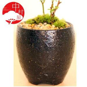 SALE【植木鉢 盆栽鉢】ゆず肌岩石ウチョウラン鉢 黒の盆栽鉢 おギフトプレゼントに