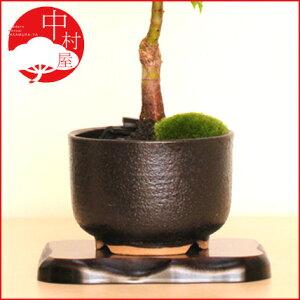 【植木鉢 盆栽鉢】ゆず肌尻丸中深M黒 盆栽鉢 おギフトプレゼントに