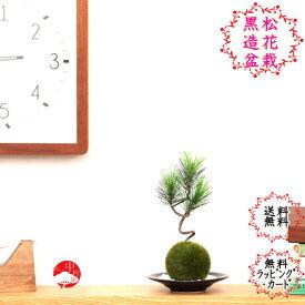【造花】黒松苔玉セット(小) 受け皿と敷き砂付のクロマツこけ玉 母の日父の日ギフトプレゼントにも