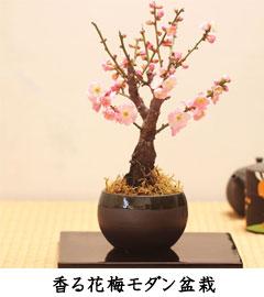 花終了の為値下げ 花梅モダンミニ盆栽 瀬戸焼 ハナウメ 香るはなうめギフトプレゼントに