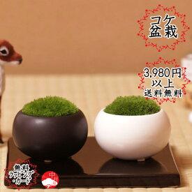 【単品】苔盆栽 陶器入りコケ盆栽 ホソバオキナゴケ ヤマゴケ お母の日ギフト母の日プレゼントに