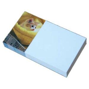 名刺 4号 50枚 フォトコレクション100 PM-13 子猫の笑顔 【 名入れ 印刷なし 紙の販売です 】【4号 写真入り 動物】