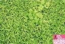 再入荷!【キルティング生地】芝生でゴロン【ぷらんぷ ちぃくす×kokka】キルトだからすぐに使える!作れる!【2013…
