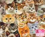 【B&BFABRICS】デジタルプリント・キャット広巾140cmリアルプリント猫ベンガルUSAコットン【生地・布】91225-01
