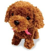 【基本宅配便送料無料】『オスト元気な仔犬トイプードルのショコラちゃん』