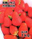 順次発送!送料無料!数量限定!池田さん家の完熟苺さがほのか(加工用)ストロベリー いちご1kgクール便発送(北海道…