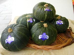 【期日指定可】今 話題の北海道産坊ちゃんかぼちゃレンジでチン♪手のひらサイズminiかぼちゃ1箱5玉入り