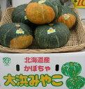【期日指定可】栗かぼちゃの最高峰!!秀品大浜みやこかぼちゃ大玉約1.6kg 5玉