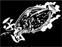【ヒラメ】迫力の魚ステッカー(転写タイプ)H140×W320