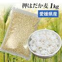 【1000円ポッキリ】国産 押はだか麦 1kg 大麦 もち麦と同じ はだか麦のうるち性 100% 愛媛県産【メール便送料無料】…