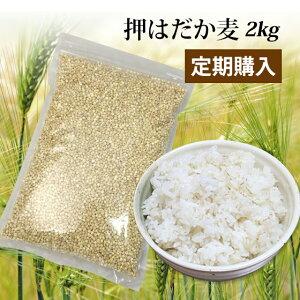 【定期購入】国産 押はだか麦 2kg(1kg×2)大麦 もち麦と同じはだか麦のうるち性 100% 愛媛県産【送料無料】大麦βグルガンが豊富!