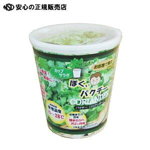 【キャッシュレス5%還元】《株式会社フォレスト》カップサラダ ぼくパクチー(コリアンダー)