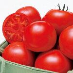 『高糖度フルーツトマトの苗6個セット』