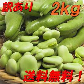 送料無料!『訳あり そら豆/ソラマメ 2kg』農家直送!発送当日に収穫します!