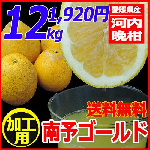 【送料無料】《加工用 河内晩柑》南予ゴールド12kg(サイズ 2S〜3L キズ・スレ・黒点・浮き・シワ)【愛媛県産】スムージーまたはジュースやゼリー、ジャムなど果汁を使った加工品向き