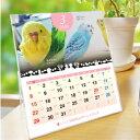 2020年 セキセイづくし卓上カレンダー(セキセイインコ)