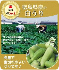 栽培全国一の徳島県産の白うり