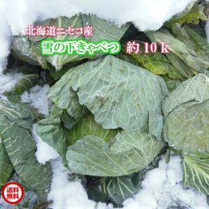 北海道ニセコ産/雪の下きゃべつ/10kg【送料無料】