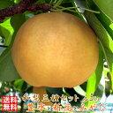 【送料無料/訳あり】和梨 5kg × 3種セット豊水+新高+みやびみやびのワケアリは他店とは、ひと味違います!梨 豊水梨 新高梨 にっこ…