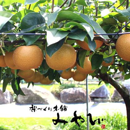 訳あり:ワケアリ:わけ有り:秋月梨5kg