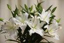 大輪カサブランカギフト(5本花束)